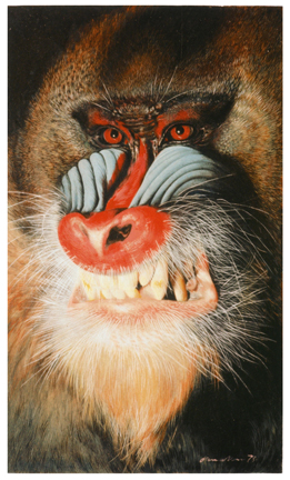 Danny Allen's photo-realistic painting acryllic painting of a Mandrill, painted on a scrap of discarded Masonite. It's about the side of a light-switch faceplate. Acrylic on board. Collection of the Allen family. It looks like it says 1971.